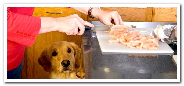 Diabetic Dog Food Recipes  Diabetic Dog Food the Homemade Recipes Happy Dog Heaven