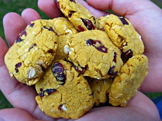 Gluten Free Dog Biscuit Recipe  5 Homemade Dog Treats For Pooches With Allergies Wag The