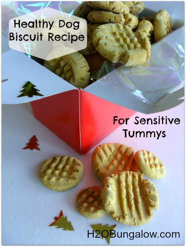Healthy Dog Biscuit Recipe  Homemade Dog Treat Recipes