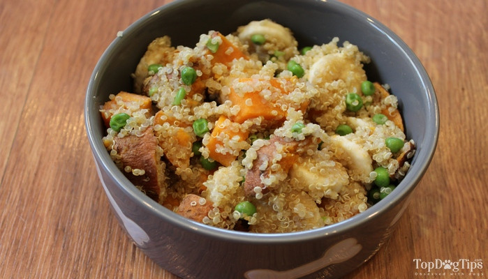 Homemade Vegan Dog Food Recipes  Homemade Ve arian Dog Food Recipe Easy to Make Video