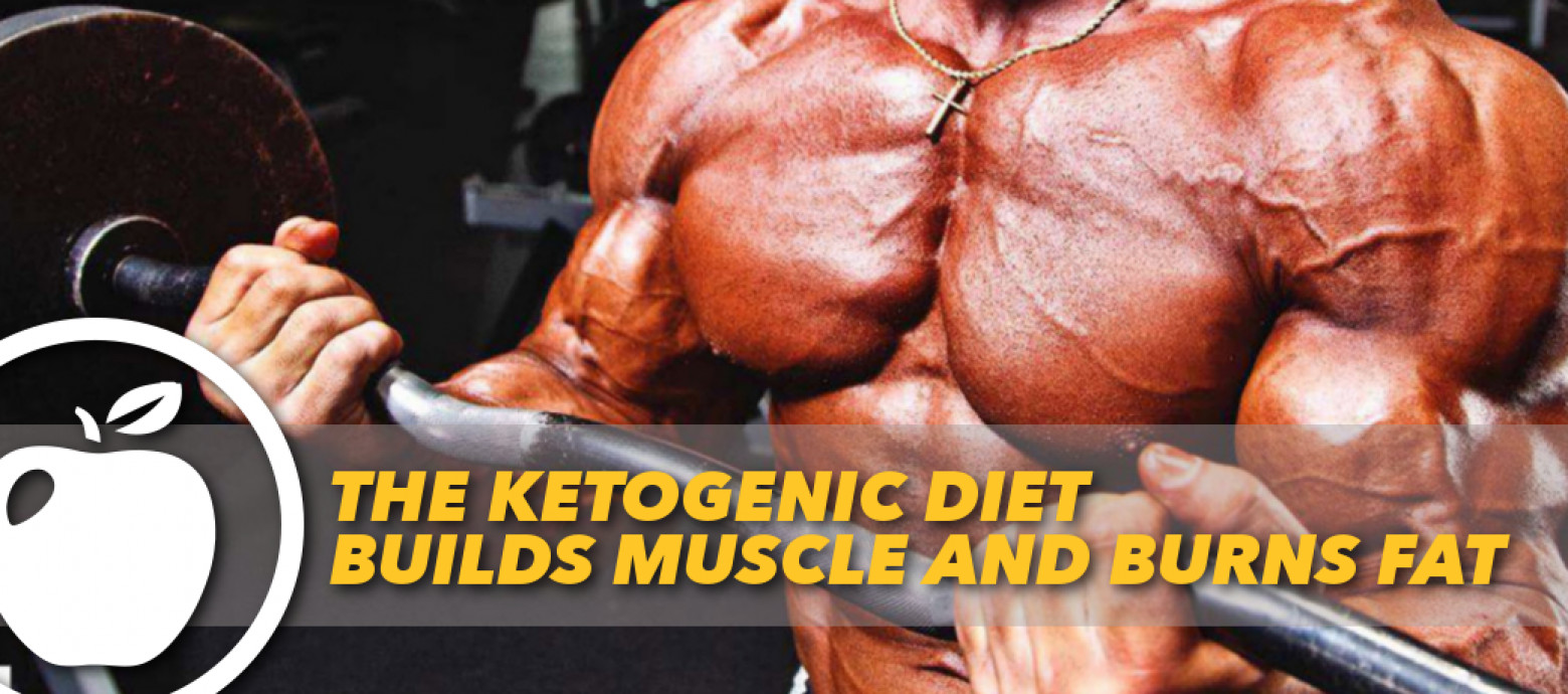 Keto Diet And Building Muscle  THE KETOGENIC DIET BUILDS MUSCLE AND BURNS FAT
