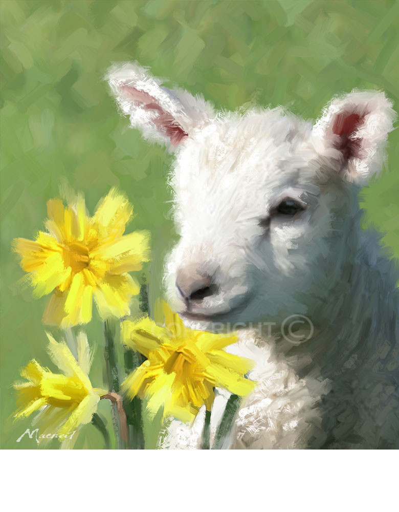 Lamb For Easter  Related Keywords & Suggestions for easter lamb