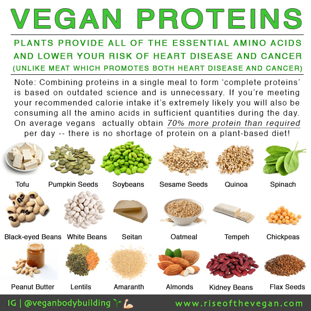 """Protein Vegetarian Diets  """"But where do you your protein """""""
