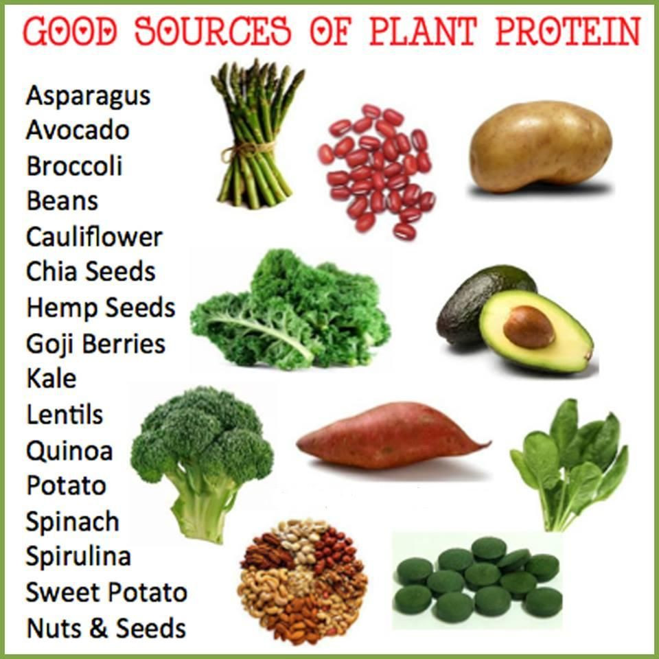 Protein Vegetarian Diets  Protein Foods for Ve arians Protein Foods It is