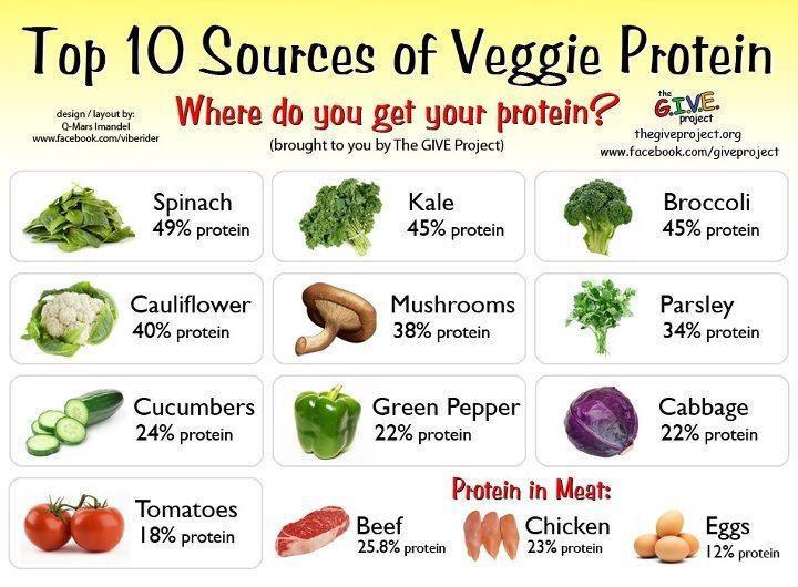 Sources Of Protein In Vegetarian Diet  Helpful Vegan Handout – amethystfawn