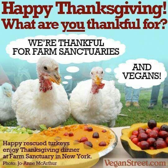 Vegan Thanksgiving Funny  310 best Funny Vegan Stuff images on Pinterest