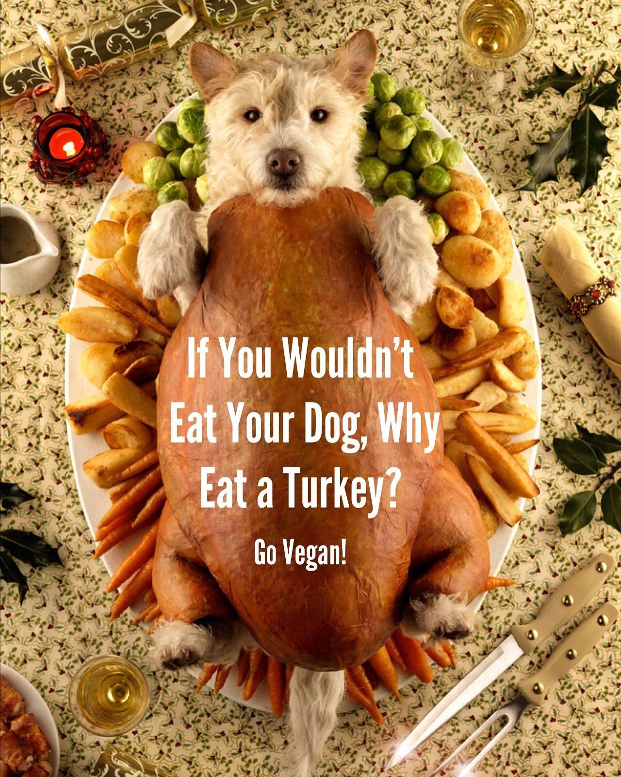 Vegan Thanksgiving Funny  Happy Thanksgiving – Vegan – Thanksgiving Blessings