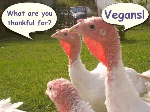 Vegan Thanksgiving Funny  Happy Vegan Thanksgiving Frugal Vegan Stuffing