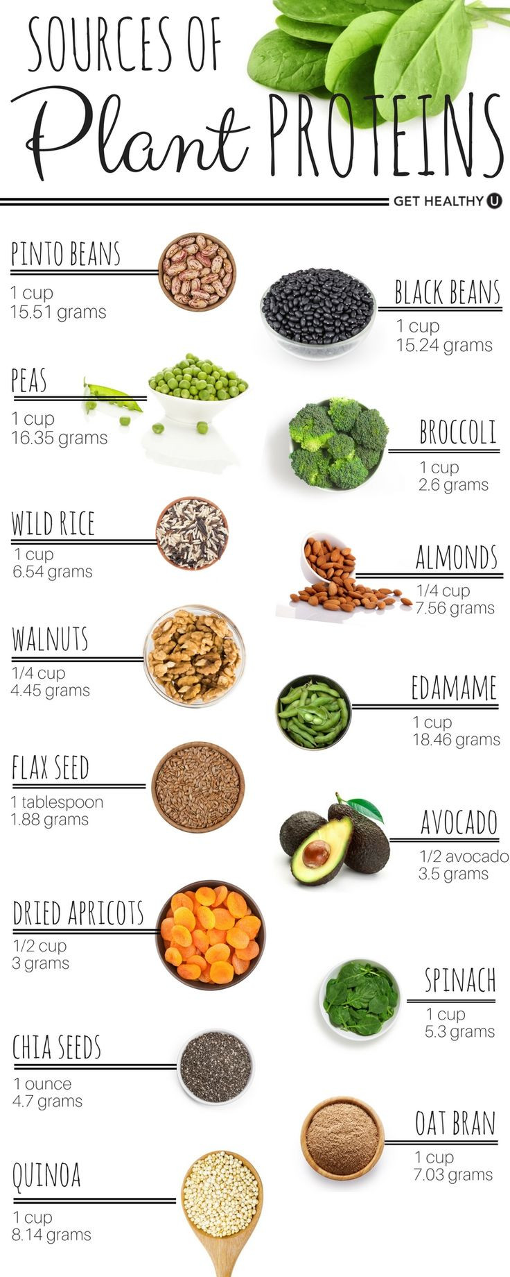 Vegetarian Protein Rich Foods  58 best Protein Chart images on Pinterest