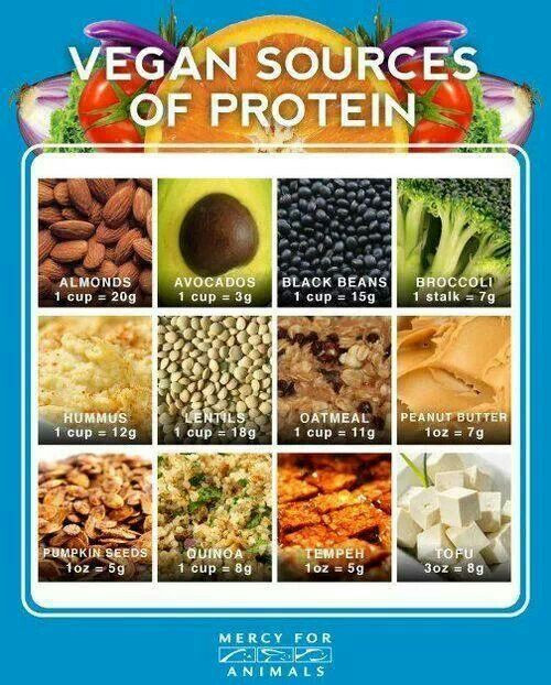 Vegetarian Sources Of Protein  Nutrition ly in Animal Based Foods
