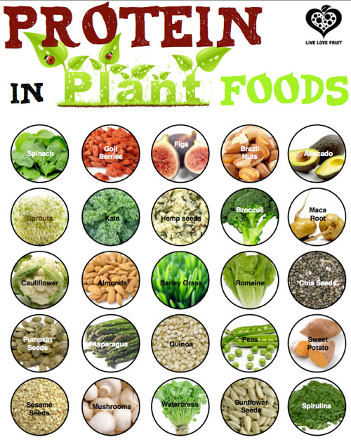 Vegetarian Sources Of Protein  Vegan Protein Options Fit Tip Daily