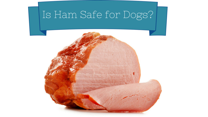 Why Do People Eat Ham On Easter  Can Dogs Eat Ham Smart Dog Owners