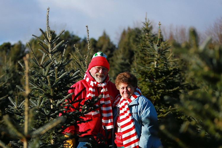 Candy Cane Christmas Tree Farm  Newer Holiday Firs fer High Performance WSJ