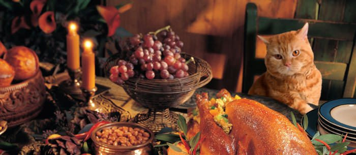 Cub Foods Thanksgiving Dinners  Thanksgiving Pet Safety Can Our Pets Eat Our Favorite