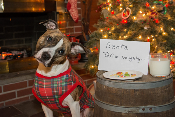 Dog Christmas Cookies  How to Keep Your Home Safe for Dogs During the Holidays
