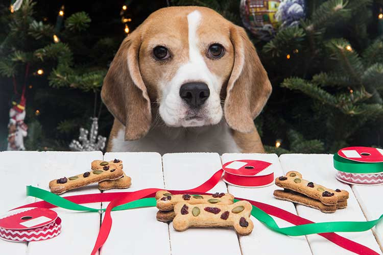 Dog Christmas Cookies  Calvin s Christmas Cookies Dog Treats The Scrumptious
