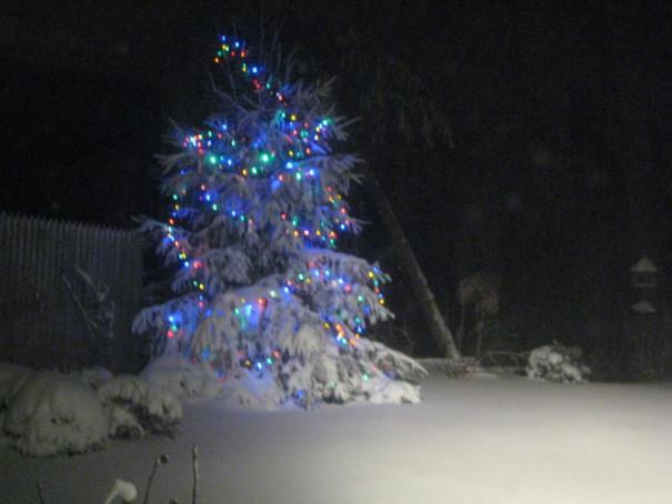 Stew Leonard'S Christmas Trees  Christmas Eve Eel Stew – italian scrapbook