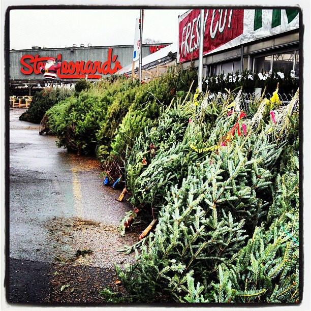 Stew Leonard'S Christmas Trees  Christmas Trees at Stew Leonard s