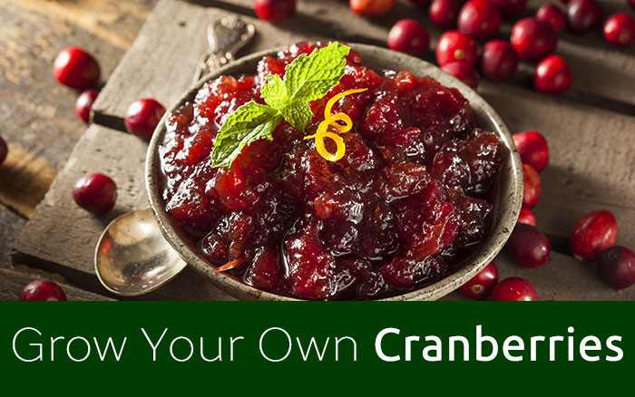 Stop And Shop Christmas Dinners  Grow Your Own Christmas Dinner Cranberries David Domoney