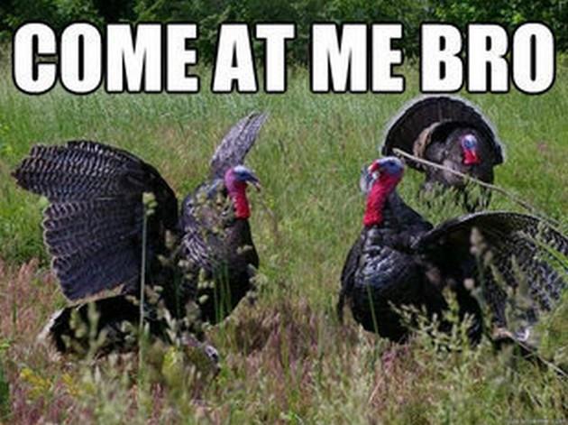 Thanksgiving Turkey Memes  Thanksgiving Memes 21 Pics