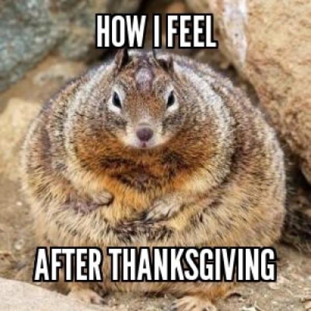 Thanksgiving Turkey Memes  Thanksgiving Memes