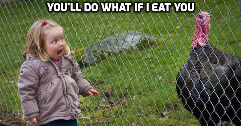 Thanksgiving Turkey Memes  These 10 Turkey Memes are Perfect for Thanksgiving