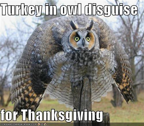 Thanksgiving Turkey Memes  Jive Time Turkey A Satire