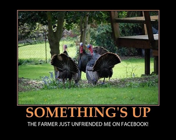 Thanksgiving Turkey Memes  Thanksgiving Memes and fun pictures theCHIVE