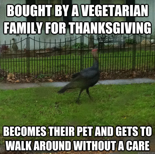 Thanksgiving Turkey Memes  Bought By A Ve arian Family For Thanksgiving Funny Meme