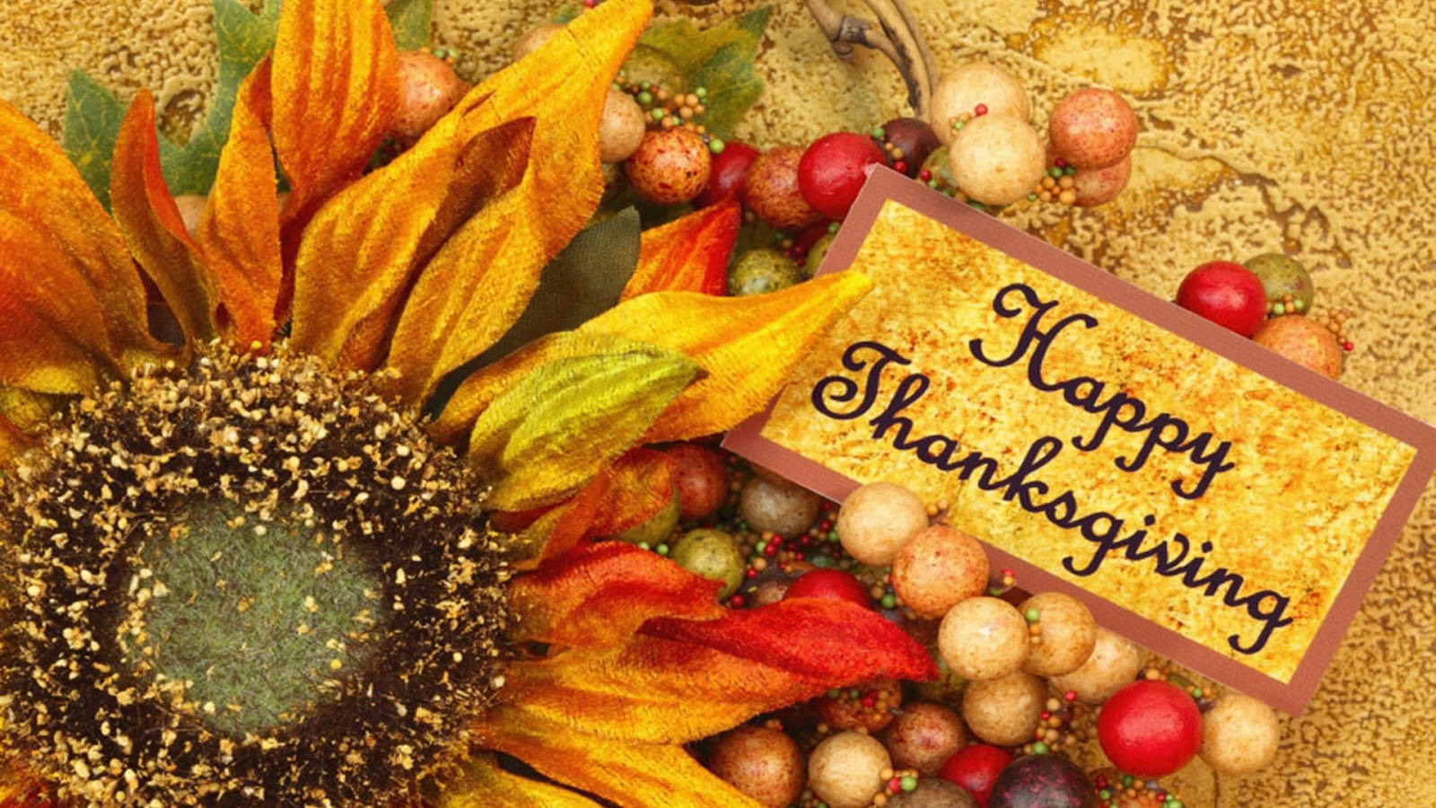 Thanksgiving Turkey Pictures Free  Thanksgiving Day 2012 Free HD Thanksgiving Wallpapers for