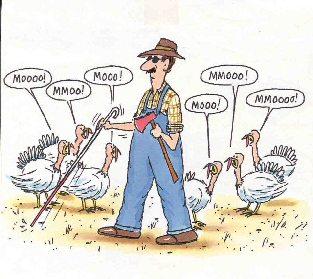 Turkey Puns Thanksgiving  holidays